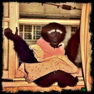 gibbon.jpg