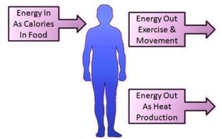 Is vinyasa yoga good for fat loss