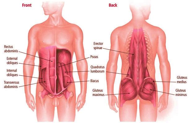 core-anatomy1.jpg